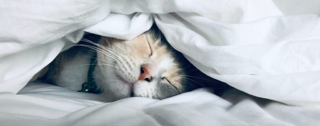 Les plantes qui favorisent le sommeil