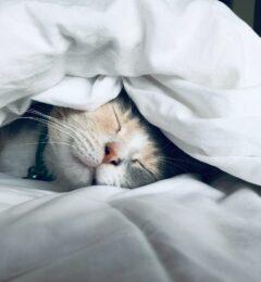 Combattre l'insomnie
