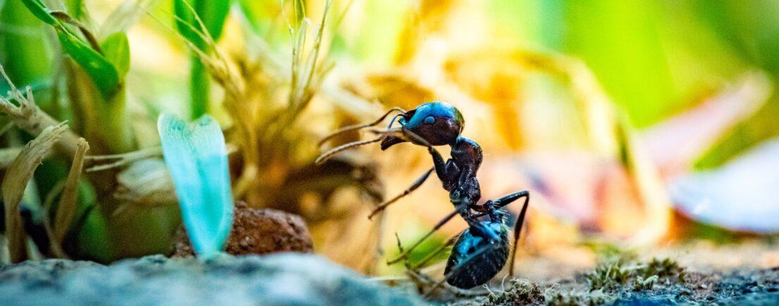 Que faire en cas de piqûre d'insecte ?