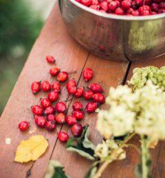 Fiche : la canneberge (cranberry)