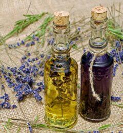Fiche : l'huile végétale d'onagre